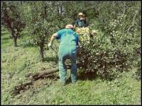 voćnjak